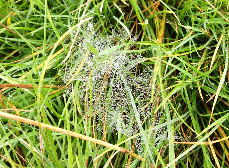 Dew-on-spider's-web